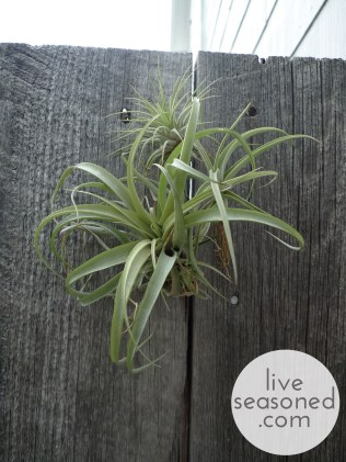 liveseasoned_summer2014_showerplants5