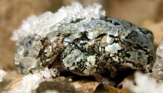 tree_frog_snow