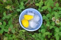 lemonade-11