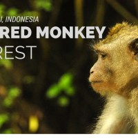 Sacred Monkey Forest Banner (1)