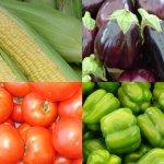 How to keep summer veggies fresh to avoid food waste