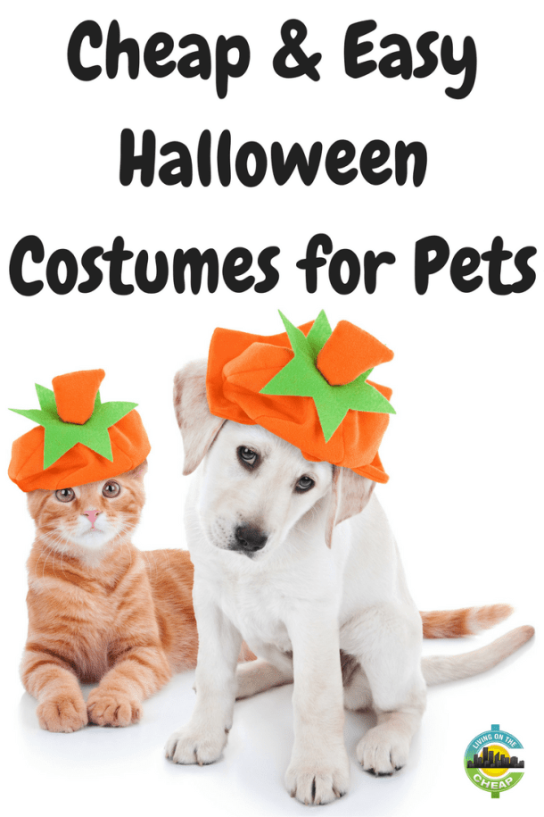 Easy Halloween costumes for pets. Dogs will even like these costumes.