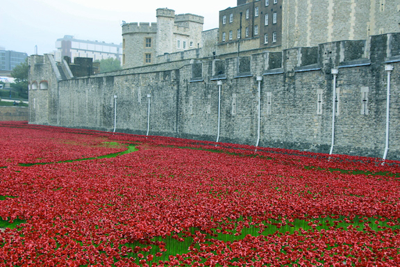 london.tower.3.poppies