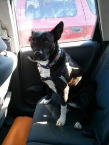 Lola Dog Jail