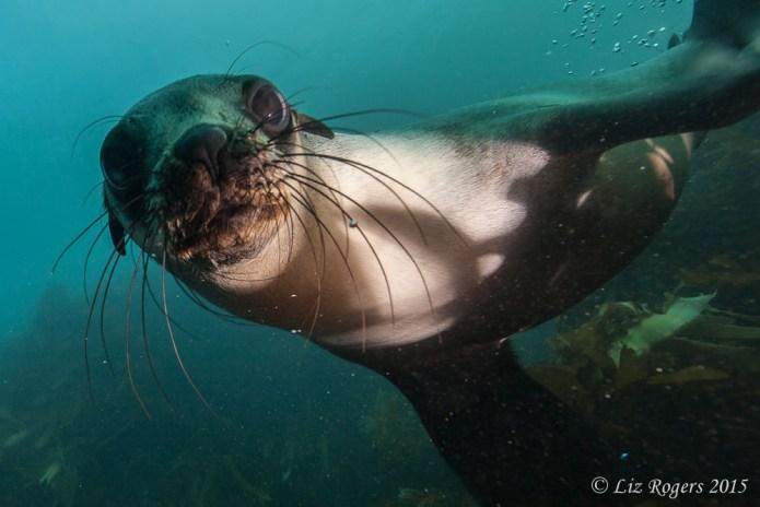 A sea lion inquisition