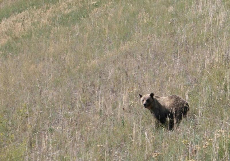 Large Of What Does Bear Poop Look Like