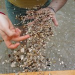 Fossil Hunting and Jewelry Making