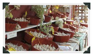 garlic table