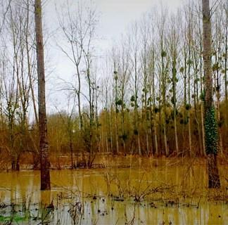 LoireXplorer crue cher Loire inodation