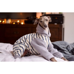Staggering Sale Texas Italian Greyhound Puppies Sale Nc Italian