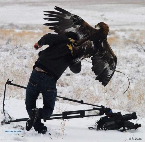 The Grace And Beauty Of An Eagle Kicking Your Ass