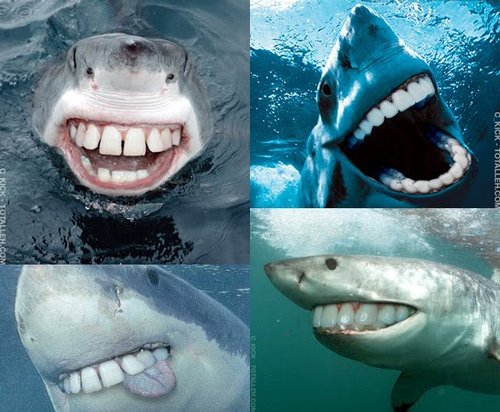 Sharks With People Teeth
