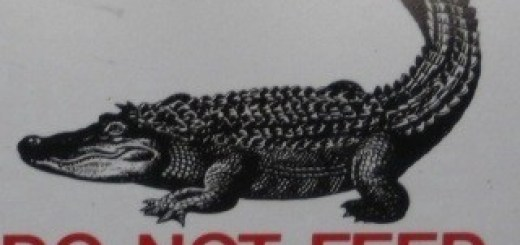 Do Not Feed or Molest The Gators
