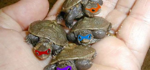 Tiny Real Teenage Mutant Ninja Turtles