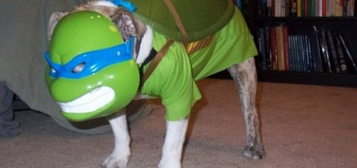Teenage Mutant Ninja Turtle Dog
