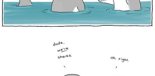 Look a Shark!