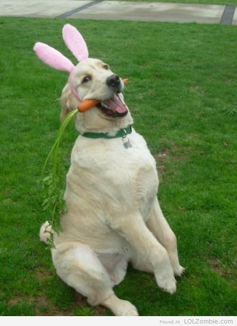 Happy Easter Dog Easter Bunny Dog