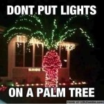 palm-tree-lights