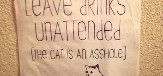 asshole cat
