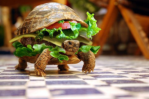 Moving Cheeseburger