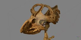 A 3D Scan of a Dinosaur Skull, made by DTP student Andrew Knapp. Image by Andrew Knapp.