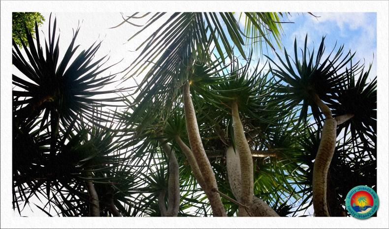 Tropisches Ambiente