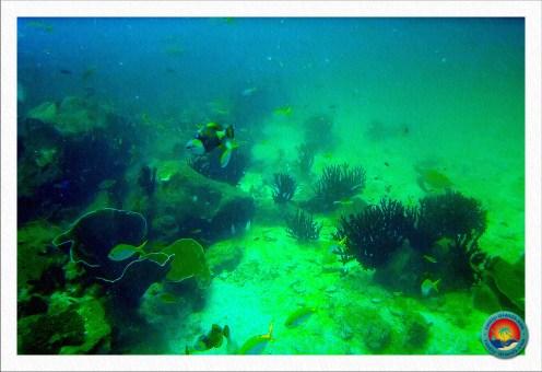 Unterwasserwelt Malaysia`s