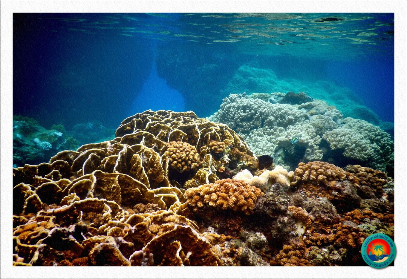 Hart- und Weichkorallen bei Apo Island