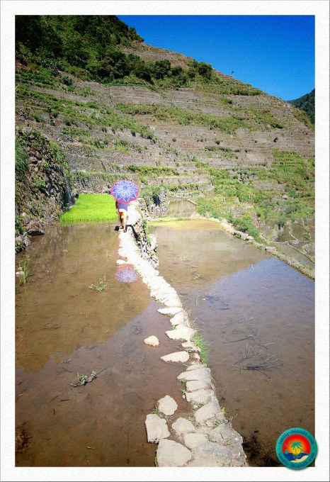 Pfade entlang der Reisfelder