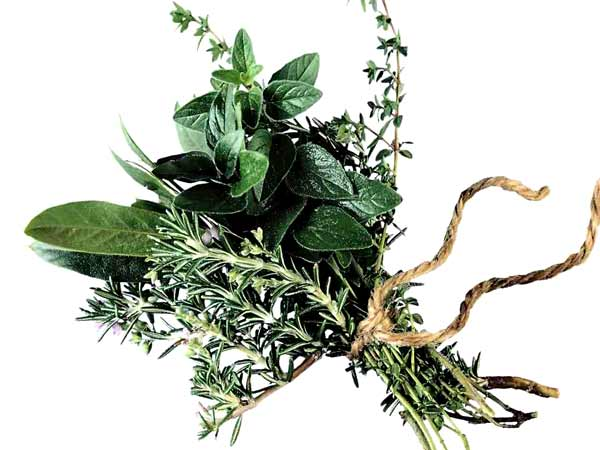 Indian  Herbal medicines  from  natural plants