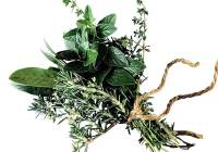 Natural Herbal Remedy - Oregano Neem
