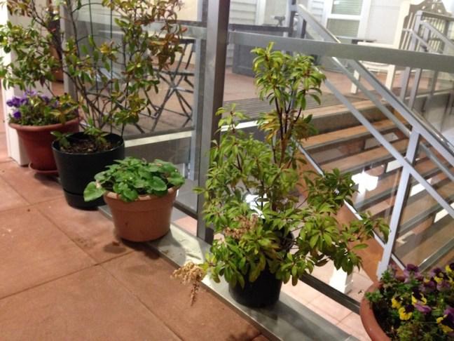 L69-030316-plants