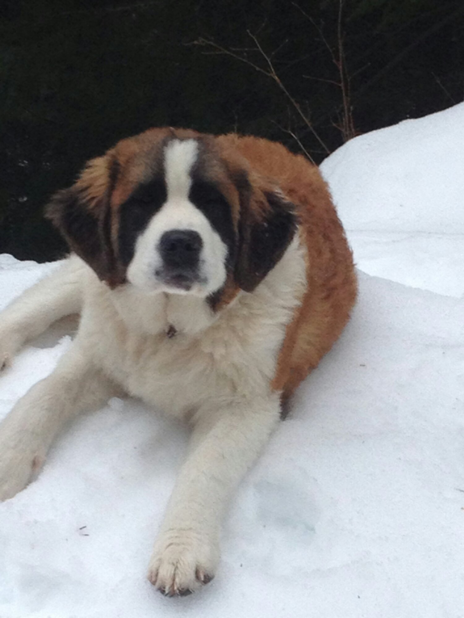 Fullsize Of Seattle Craigslist Pets