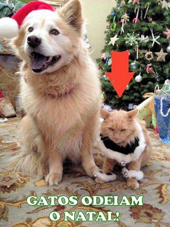 gatos odeiam o natal