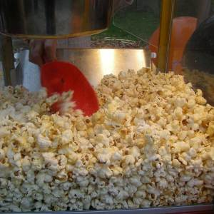 Fournitures_pop_corn_a_volonte