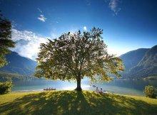 Ibogaine Tree of Life