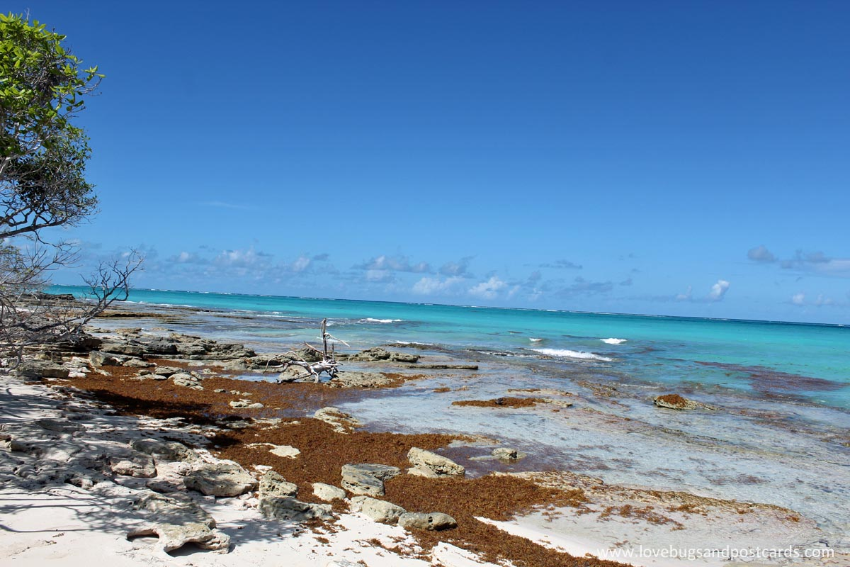 Little Water Cay (Iguana Island) - Turks & Caicos Providenciales