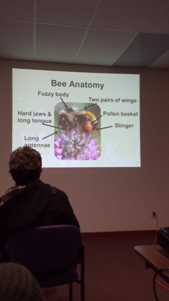 Манитобские пчелы (1)