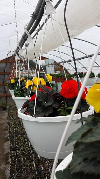 Hillside greenhouses (9)