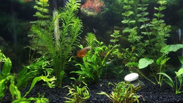 fish tank (5)