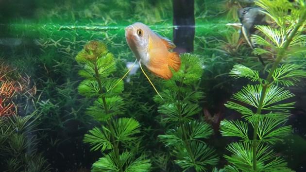 fish tank (6)