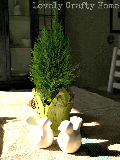 lemon cypress
