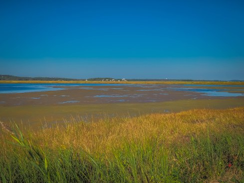 Salt Marsh, so beautiful!