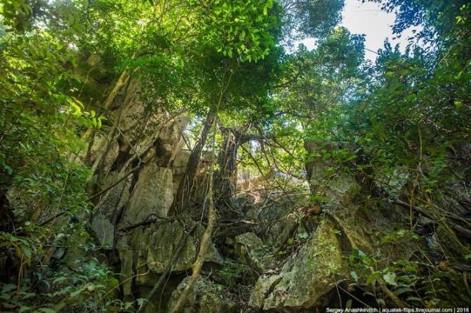 Каменный лес Цинги