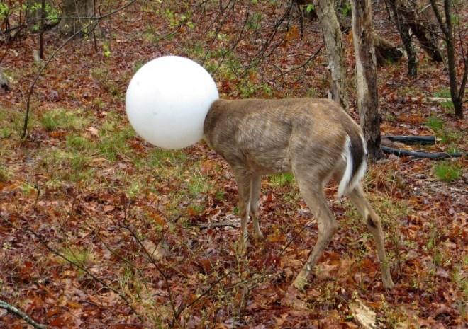 олень из штата Нью-Йорк пошел большой плафон от светильника и засунул туда голову
