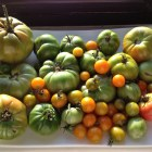 Green tomatoes, green vegetables