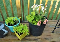 Potted Flowers on Deck 2