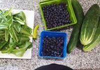 blueberry instagram