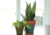 New Potted Plants Feb 16-2