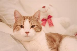 Tips for How to Deal with Finicky Cats